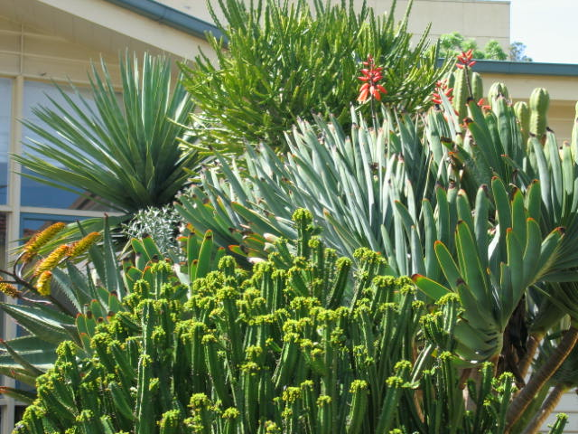 Aloe in flower, pilanties and forex (sp?)